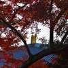 東大寺 晩秋/木の葉はひらりひらりと舞いながら音もなく足もとへ。大仏殿、講堂跡、大仏池辺り、多彩な色模様です。