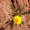 【一日一枚写真】石垣の中から咲く命【スマホ】