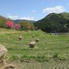 飛鳥(明日香村)・橿原の見所を巡る自転車旅、予算、所要時間は?【奈良】