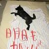 甲斐犬サン、退屈するの巻〜(・ε・`)スネチャウ