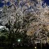 2年ぶりの六義園のしだれ桜