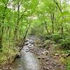 【蔵王】自然いっぱいのお風呂や森の散歩を楽しむ♪ゆと森倶楽部での一泊<2日目>