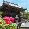 【春の牡丹を撮りにいこう】花の御寺・奈良「長谷寺」を参拝する