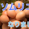 【認定】卵ソムリエの資格をゲットした話【一ツ星タマリエ】