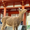 奈良県の世界遺産「春日大社」の魅力に迫る!見どころやアクセス等を詳しく紹介