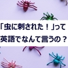 「虫に刺された!」って英語でなんて言うの?【旅で使えた英語⑦】