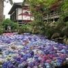 あじさい祭りは7月20日まで!池に紫陽花が浮かぶ「水中華」は必見!【雨引観音(茨城・桜川)】