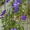 ゴールデンウィークの庭