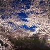 2017年春のお花見デートはどこに行く?【下越編】