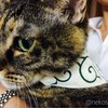 お客様のお姿をご紹介(ΦωΦ):細唐草柄ホワイト・猫用バンダナ風首輪/角カンあり(子猫から成猫まで)