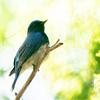 🦜野鳥の回【167】三重県民の森~猪名部神社を捜索する