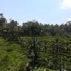 バリ旅行②ライステラス・ウブド・ウルワツ寺院で1日観光