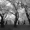 桜色の帰り道