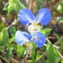 フラワーエッセンスの植物研究ノート