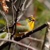 日本 2月1日の文殊の森公園の野鳥たち