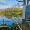 モネの庭・睡蓮の咲く池(高知県北川)