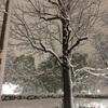 ⚠️大雪警報❄️❄️❄️