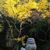 那谷寺の紅葉見てきました(狛犬)