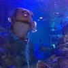 宮津の水族館、『魚っ知館』に行ったよ