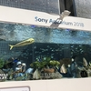 Sony Aquarium 2018  銀座ソニーパーク