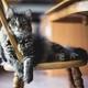 テレワークの生産性を高めるおすすめ椅子 | 疲れ知らずの在宅勤務に