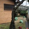 2020/08/02 雑草抜きとプラムの木伐採と防草シート敷き