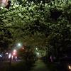 小田原の夜桜散歩を堪能&Bar Jardinでちょっと一杯