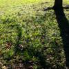 秋の日差しと長い影 影の傾く時を待ちわび