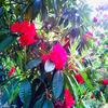 真っ赤な花は…