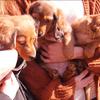 犬の多頭飼い暮らし日記:「おさんぽデビュー」写真レポ