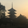 今日の京都東寺の五重塔(お花見) その1