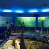 油壷マリンパークの水族館はショーやイベントが多い!子連れにお勧め♪