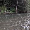 旭川市、辺別川でニジマス釣り!息子くんニジマスジャンプ初体験!