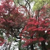 京都へ行ってきました! 世界文化遺産 醍醐寺 桜馬場〜伽藍入り口編