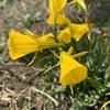 散歩で見かける花の名前や花言葉を知り、趣味の輪が広がる。黄、白、青紫の花。