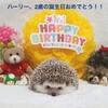 ハーリーの2歳の誕生日