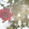 花の一生・・・ではなく晩年だけ