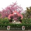 全国都市緑化よこはまフェア開催中!!横浜で遊ぶなら要チェックの花イベント