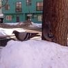 【一日一枚写真】二匹の鳩【スマホ】
