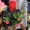 ソーシャルガーデナ倶楽部  ハンギング作り・バルコニーの花