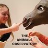 The Animals Observatory ジ・アニマルズ・オブザーバトリー 16AW ご予約販売スタート