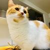【猫学】猫のニキビ。その名もあごニキビ!
