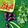 庭の夏野菜がジャンジャン