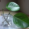 剪定を繰り返してる観葉植物の約2ヶ月後。