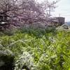 藤が咲いてた