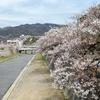 会下山遺跡から保久良神社へ