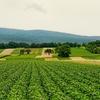 【脱サラ農業】で知っておくべき給付金・費用・収入・心構えについて