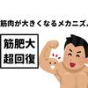 【筋トレ】超回復とは?筋肉を壊して育てる法則【筋肥大に欠かせない】