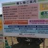 熊本県白川河原での2年ぶりの植木市