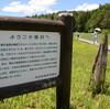 夏の黒沢へようこそ 草花を求めて